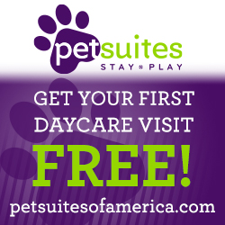 Pet Suites Daycare | BradeontonDog.com